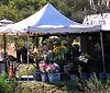 Mon 06-06-05 Corner Flower Stand