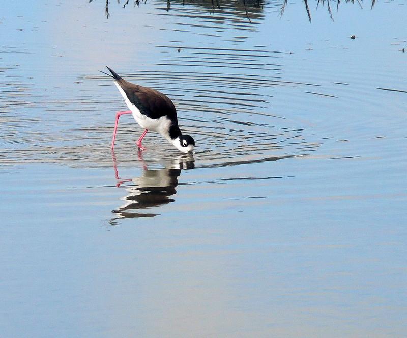 Sat 03-11-06 - Bike Path - Shorebird (3)