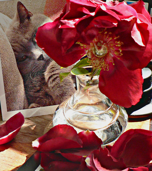 06-05-06 Sat - Red Rose and Reggie