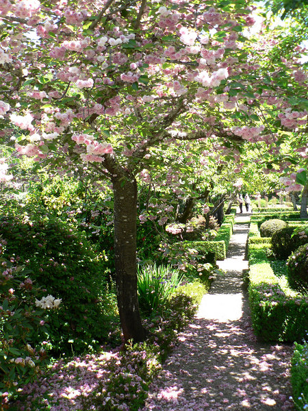 06-05-18 Filoli - Cherry Blossoms