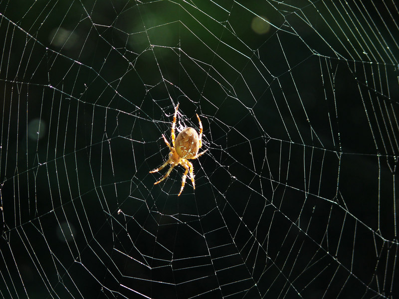 Wed 10-25-06 Spider and Web