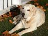 Mon 10-23-06 Doggie