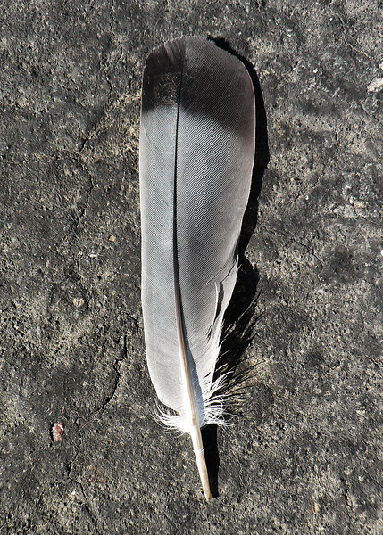 Tue 06-09-12 Feather