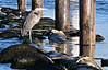 Tue 06-09-19 Junkyard Heron