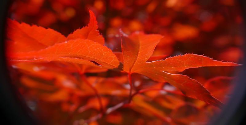 4-27-2007 - Backyard Under the Maple