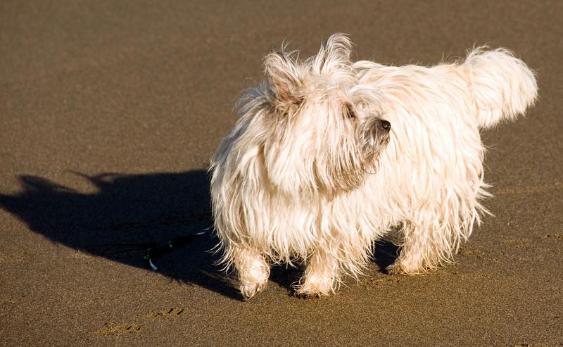 12-30-07 Baker Beach White Cairn