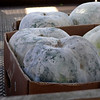 02-16-07 Chinatown with Joyce Jue -  Bitter melons being delivered