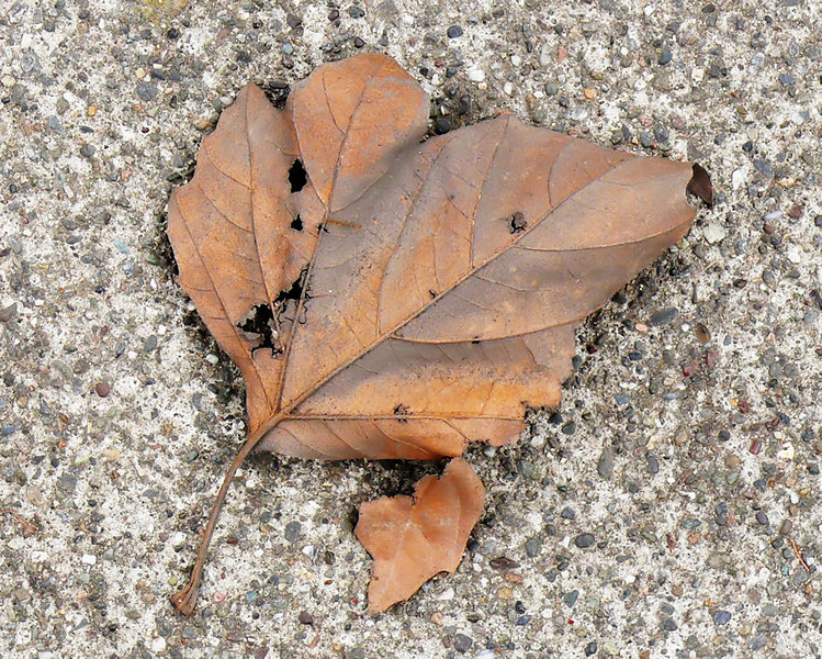 Wed 01-31-07 Leaf and Concrete