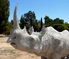 7-28-2007 - Catoga Rhino