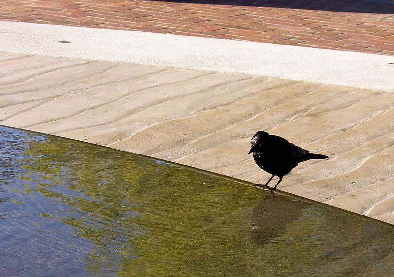 7-15-2007 - Hike to Tiburon - Bird in Fountain (2)