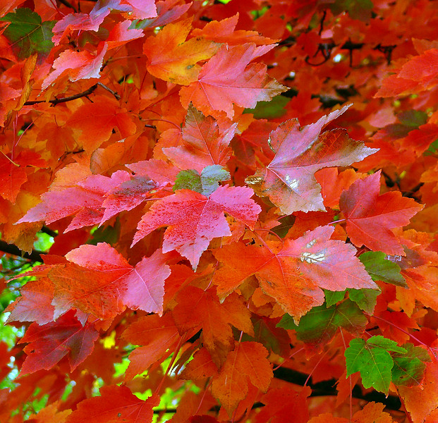 10-14-2007 Fall Color at J Winery