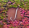 "Sunday 10-14-2007 - Day in Sonoma - starting at ""J"" winery"
