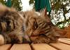 10-14-2007 - Rochioli Cat