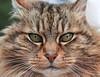 2-18-08 Sonoma - Rochiolli Kitty