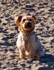 02-28-08 Beach Dog