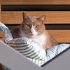 2-9-08 Morning Walk - Cat on the Porch (1 of 1)