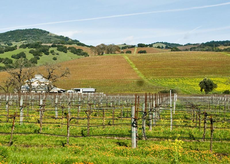 03-01-08 Sonoma Vineyard
