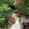 04-10-09 My Yard - bridge and maple