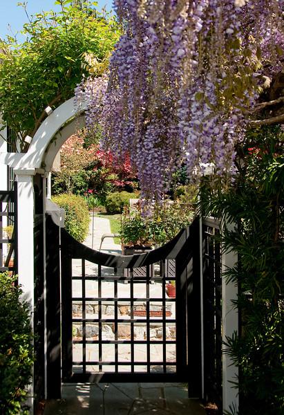 04-18-09 Thru the Gate to the backyard