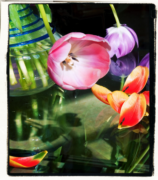 """04-16-09 Tulips in Vase - Time Machine Cross Process<br /> <br /> Time Machine is a """"Photo Effect"""" filter in Paintshop Pro. It's a blast to play with and try different looks on photos. I reallly like this one - Cross Process - that intensifies the saturdation and puts this funky border/frame on the shot. FUN!"""