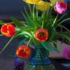 04-14-09 April Tulips (2)