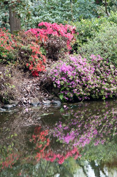04-10-09 Sonoma Hort Azaleas Reflected