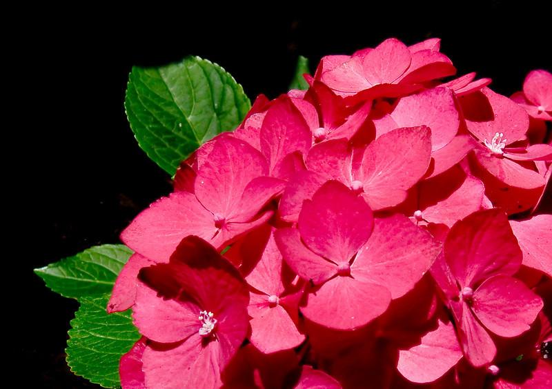 08-21-09 Backyard - Pink ---1