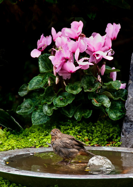 08-21-09 Backyard - Birdbath-editted