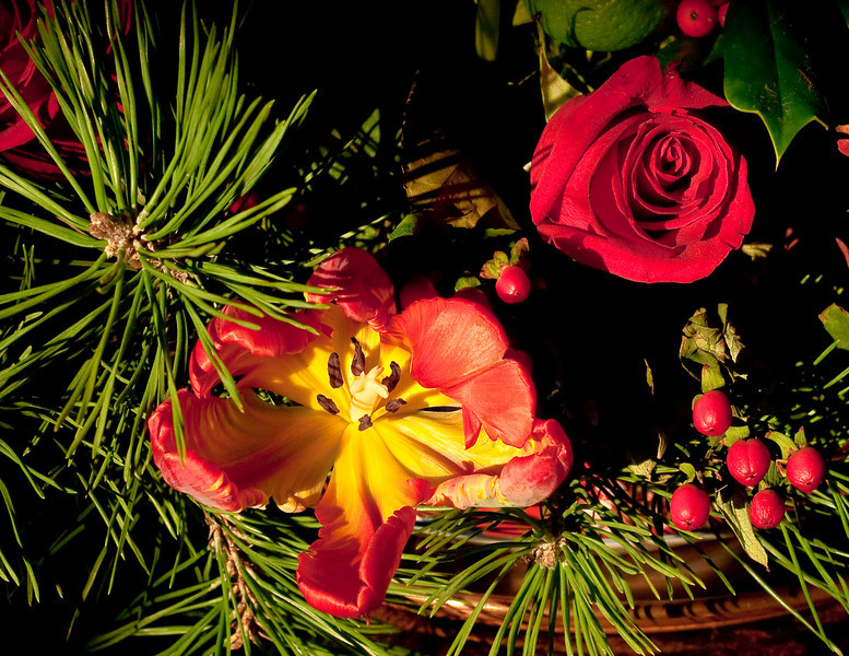 12-17-09 Another Tulip shot - this time with natural sunlight streaming in the french doors  & hitting the arrangement on the bar. Incredible color saturation is for real. Amazing how long the arrangement is hanging on - we bought the flowers last Friday at Safeway.