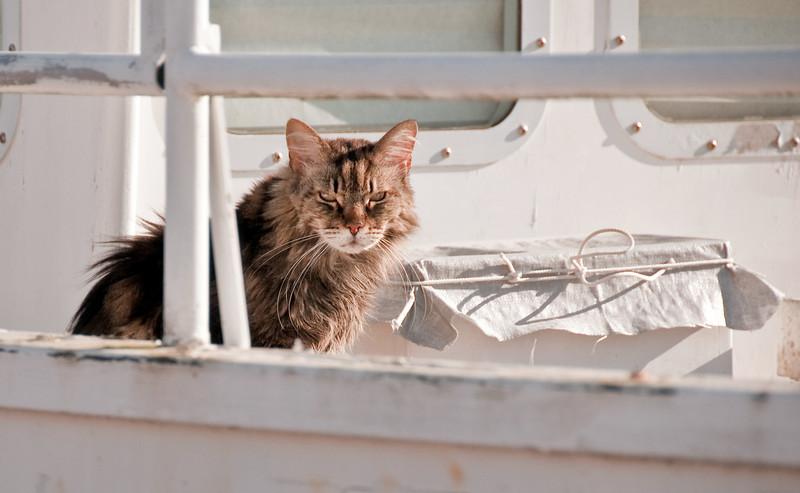 07-18-09 Photowalk Sausalito - Boat Cat