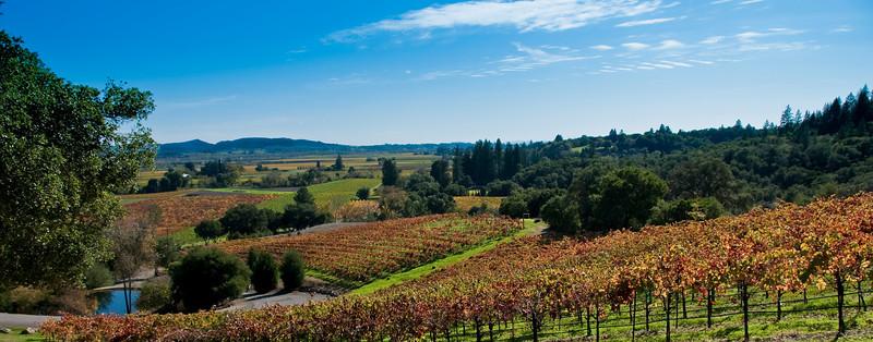 11-08-09 Fall Color at Armida Winery