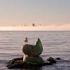 09-11-09 Sausalito Sea Lion and Skyline
