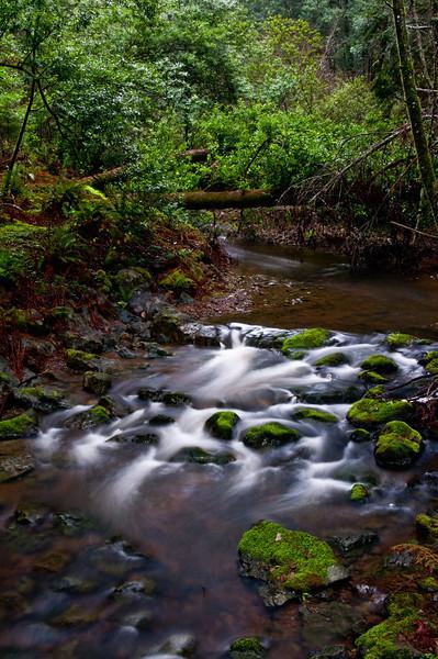 Muir Woods-30
