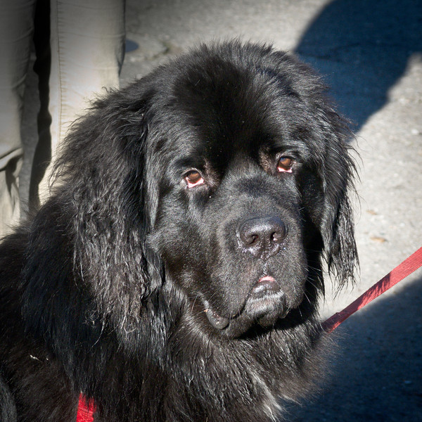 11-02-10 BIG black dog.