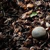 10-25-10 Quarryhill Botanical Garden with AB: ground finds