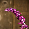 6-23-11 Purple-11