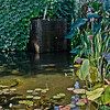 8-31-11 Pond at Frog's Leap winery