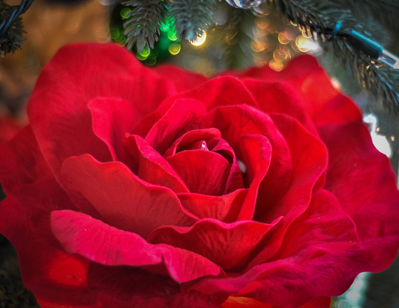 Favorite Ornament<br /> GIANT roses - this year as tree topper