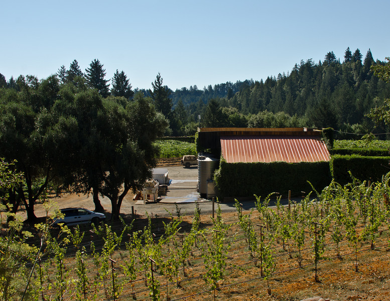 9-1-11 - Smith-Madrone winery from the hill above where we walked with Curley
