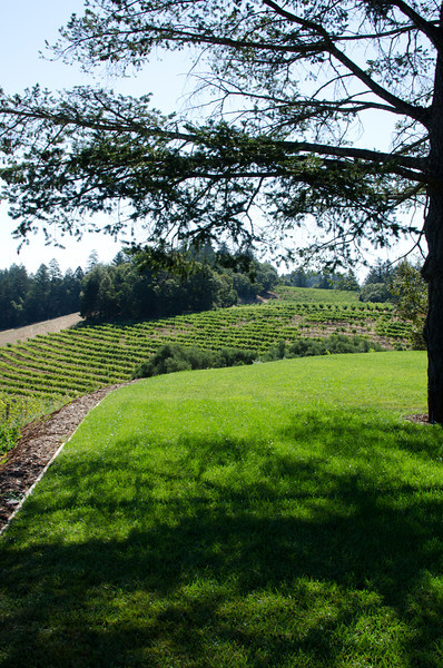 """9-1-11 Smith-Madrone Winery on Spring Mountain Road in St. Helena. They called this the """"wedding grove"""". We took a walk up here with Curley (next picture) because we were early for our tasting appointment and they weren't quite ready for us. Beautiful."""