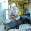 Elaine Dupras with the 40-inch spread, 650-pound moose she shot in New Hampshire last fall.