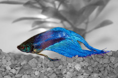 One Fish, Blue Fish  Winner, 3rd Place, Open Category Wallingford Camera Club January 11, 2006