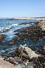 Pebble Beach, California  - (c)2008 Michael Landry Photography, LLC