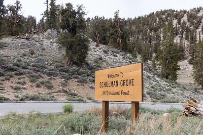 Schulman Grove