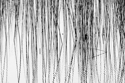 Reeds, Ripples and Reflections