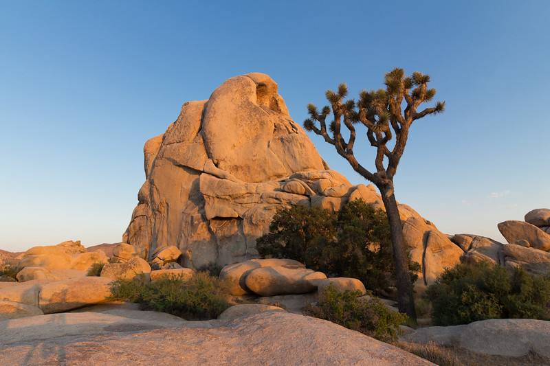 Joshua Tree National Par