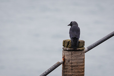 Jackdaw at the Theater