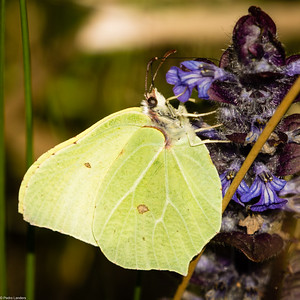 Brimstone on Self-Heal