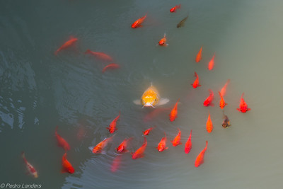 Big Fish - Little Fish