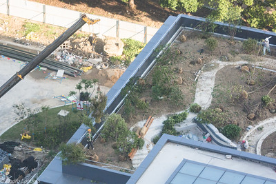 How to Plant a Roof Garden